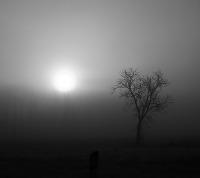 svetlo-tma-strom-nahled