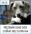 Mezinárodní den zvířat bez domova