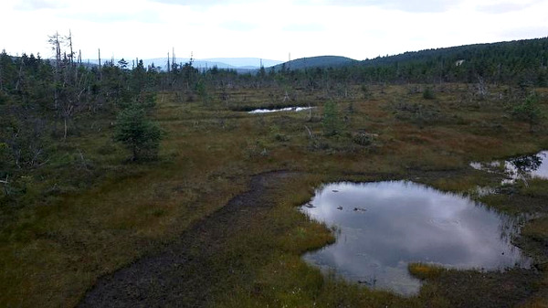 Rašeliniště na Čihadle v Jizerských horách (966 m.n.m.). Tamní klima bývá chladnější s roční průměrnou teplotou vzduchu nižší než 4 °C. Meteorologicky zajímavá lokalita.