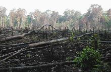 deforestrace