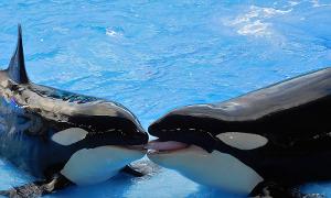 Kosatky v delfináriu