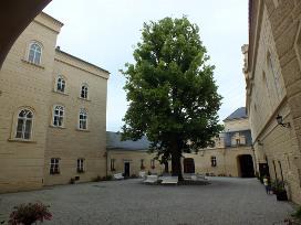 Lípa nacházející se v nádvoří novobarokního zámku hraběcího rodu Lažanských v Chyši. Je vysazena na zlomovém vyzařovacím průsečíku linií, což v tomto případě způsobuje neobvykle velký vyzařovací prostor nejenom na celém nádvoří, ale též vnitřních prostor zámku.